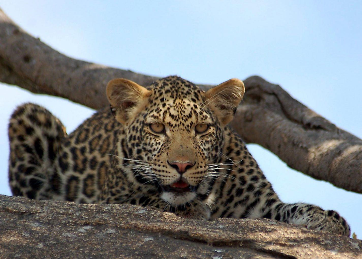 171413edc6bd72 Tanzania  Parels van de Serengeti