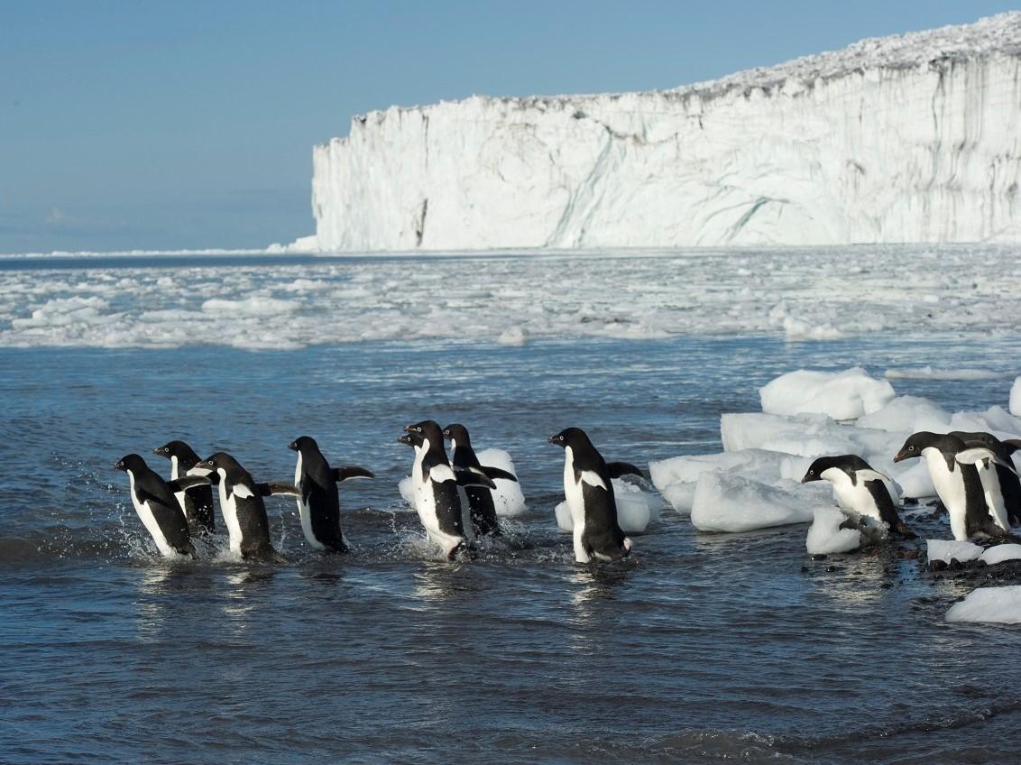 reis antarctica, cruise antarctica, wildlife antarctica, oceanwide