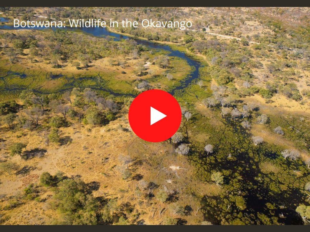 film wildlife Okavango Delta