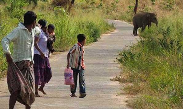 Human-Elephant conflict Yala NP