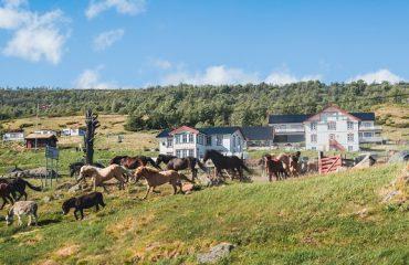 Paarden bij hotel Hjerkinn Fjellstue og Fjellridning