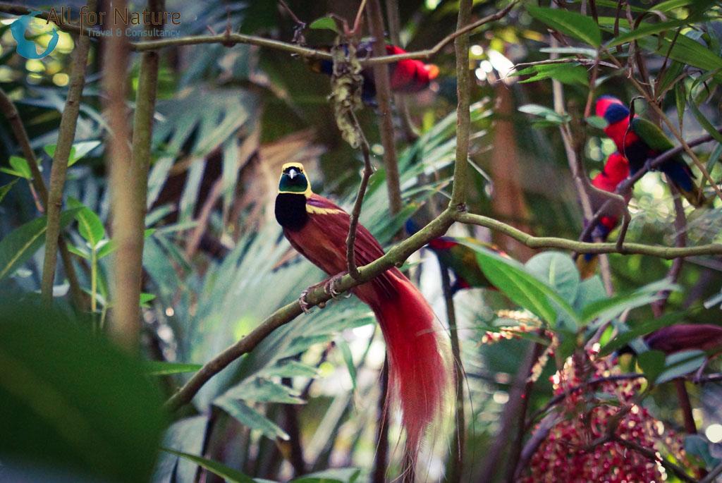 paradijsvogel reis