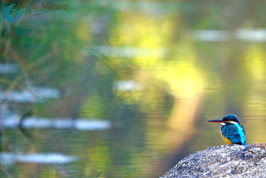 vogel reis India
