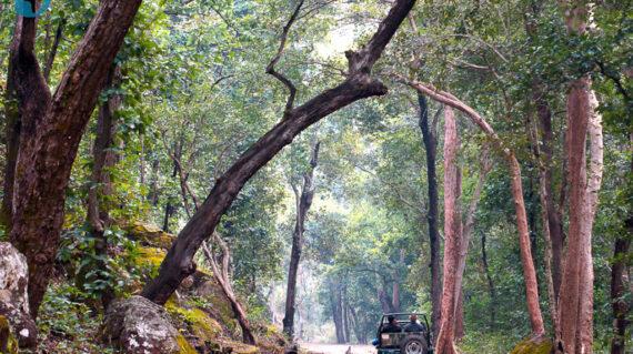 gamedrive Kanha National Park