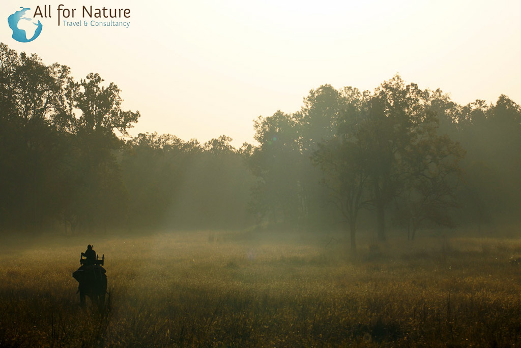 parkranger in Kanha National Park