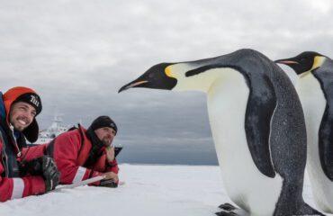 Keizerspinguins Ross Sea ©Rolf Stange