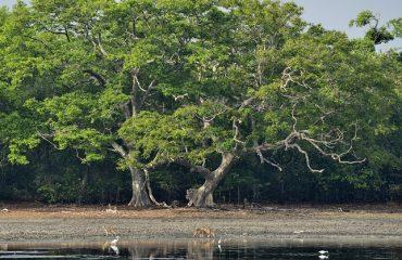 landschap Sri Lanka ©Martin van Lokven