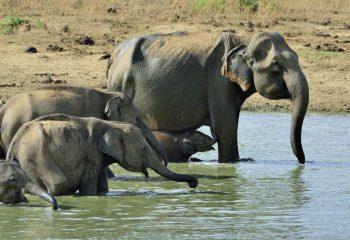 Olifanten Sri Lanka © Martin van Lokven