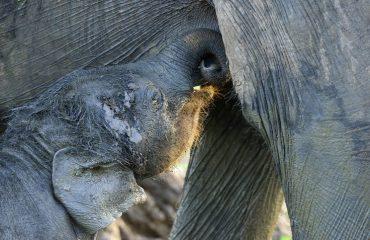 baby olifant ©Martin van Lokven