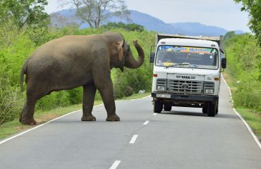 Olifant onderweg in Sri Lanka ©Martin van Lokven