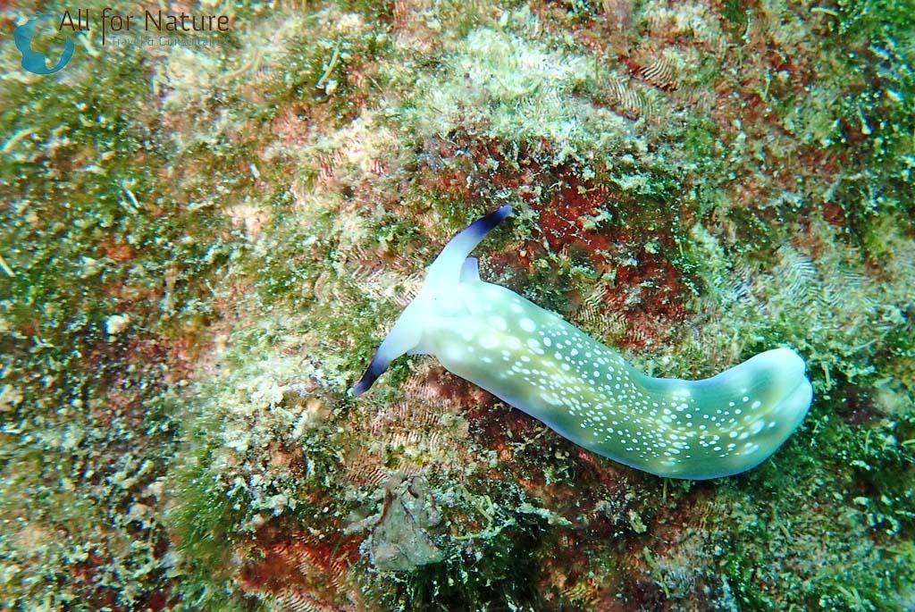 duiken koraaldriehoek