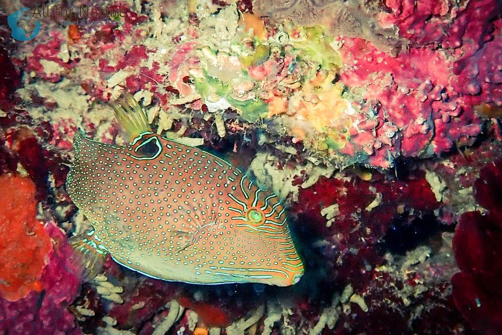 duiken in tropische wateren