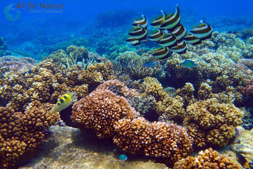 koraal in Papoea-Nieuw-Guinea