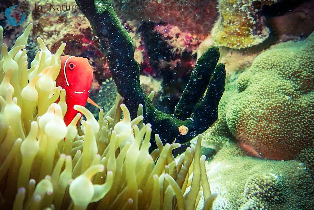 duiken bij Koraaldriehoek