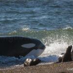 Orka Say Hueque , patagonie