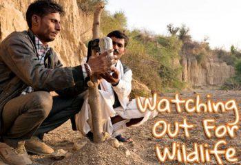 TOFTigers Tigerwatch © Aditya Singh