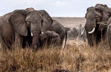 Wildlife Migration Basecamp Masai Mara