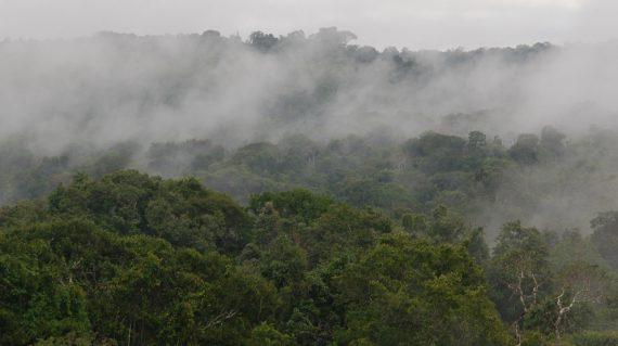 brazilië-Amazone regenwoud