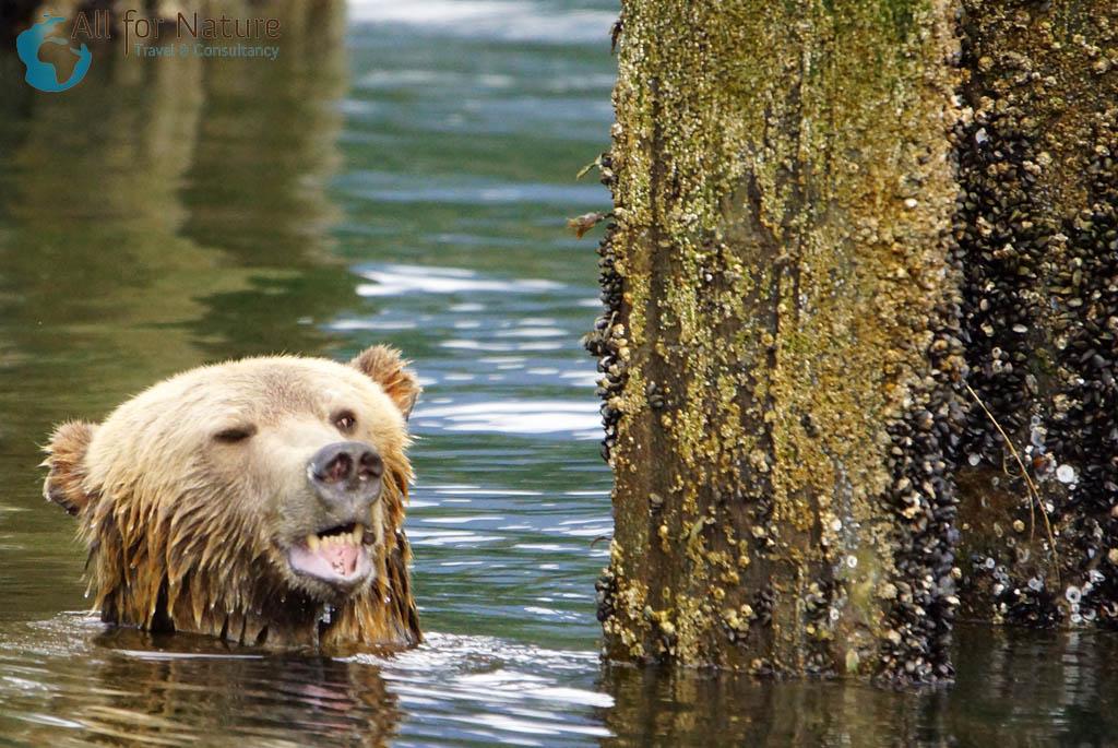 grizzlybeer bootexcursie