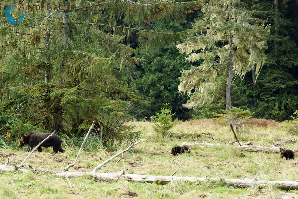 beren spotten reis