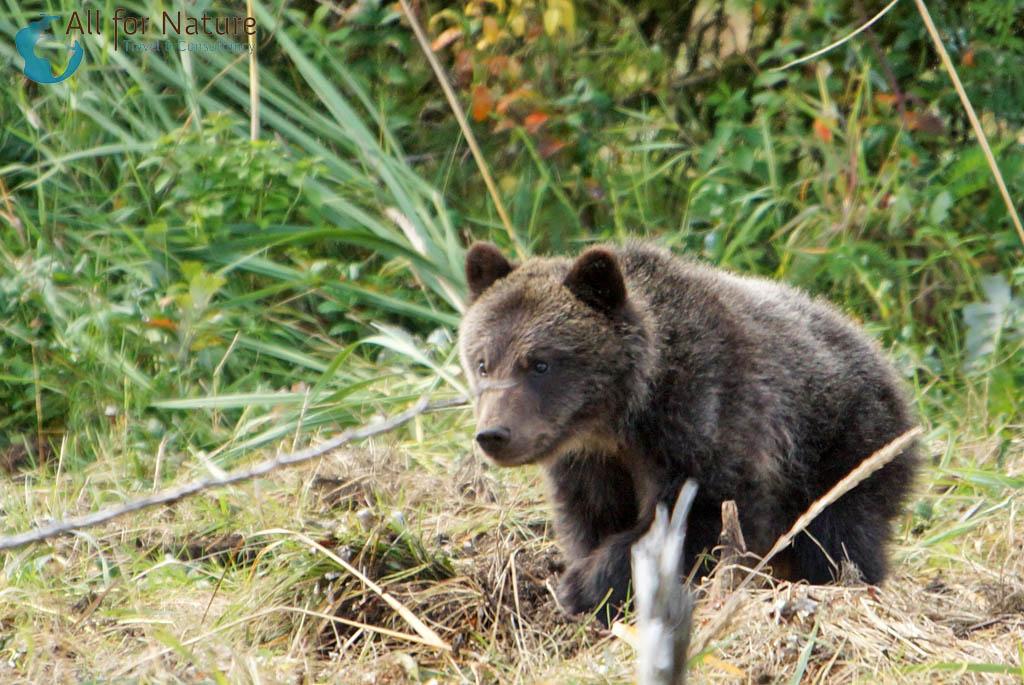 wildlife reis beren