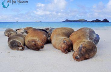 zeeleeuwen Galápagos