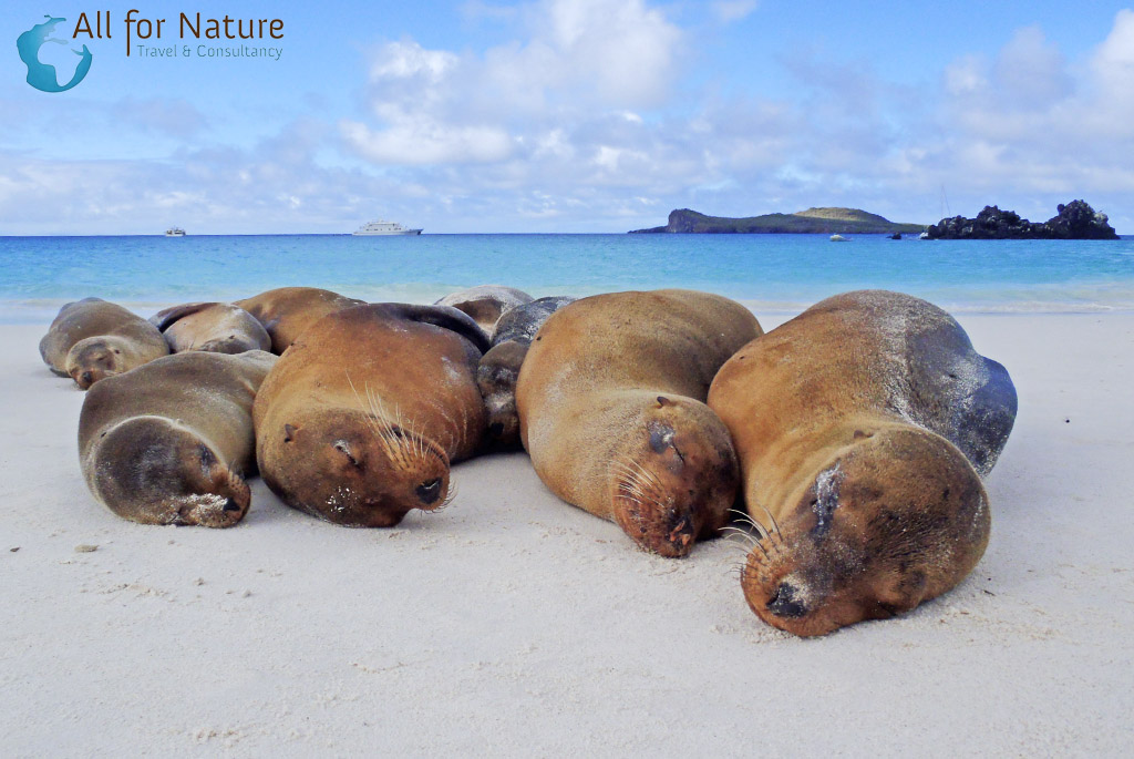 zeeleeuwen Galapagos