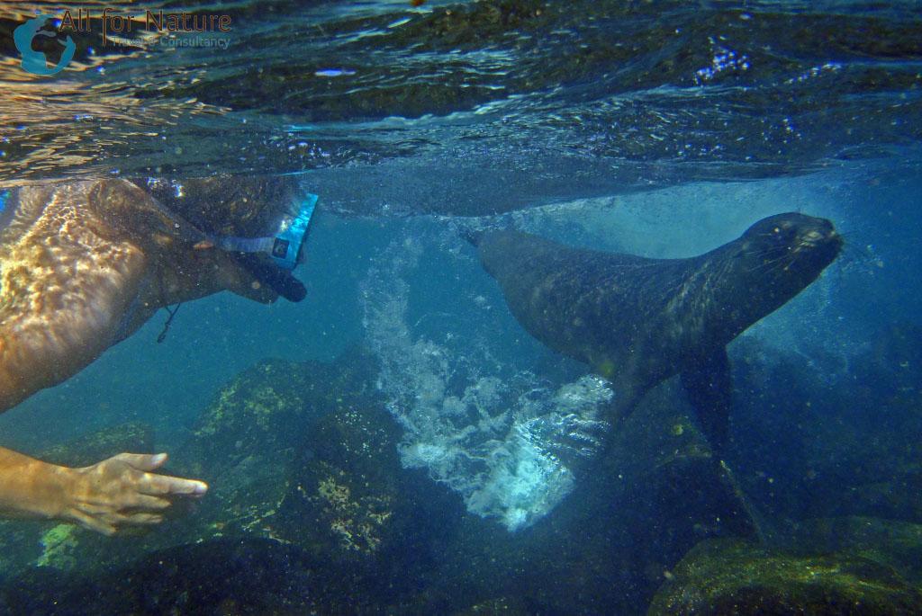 snorkelen Galapagos