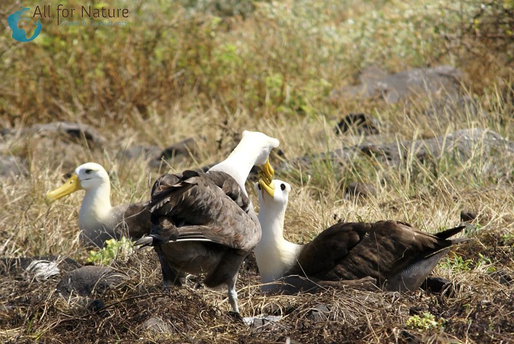 vogelreis Galapagos