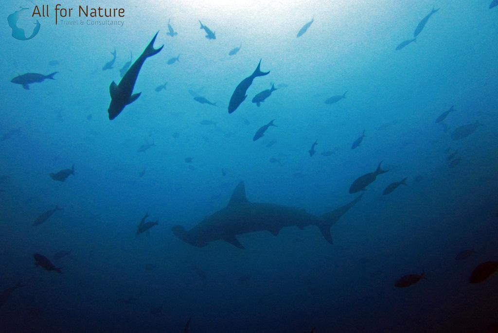 duiken Galapagos