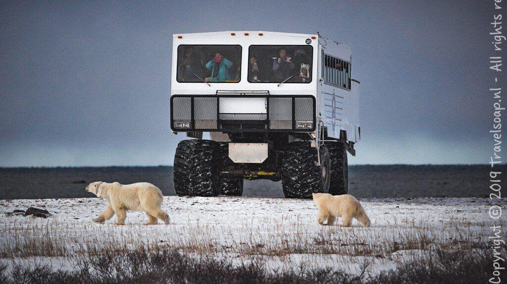 waar kan ik ijsberen zien