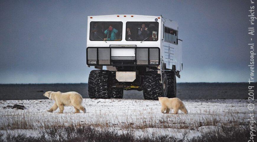 ijsberen-voor-de-tundra-buggy
