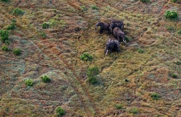 olifanten vanuit de lucht Masai ©All for Nature Travel