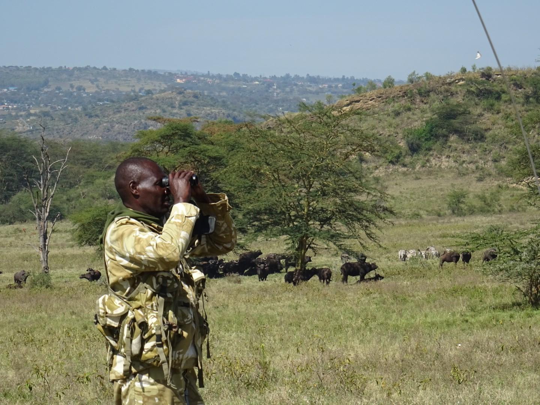 rangers Kenia