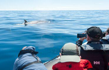whale watching ©Martin van Lokven