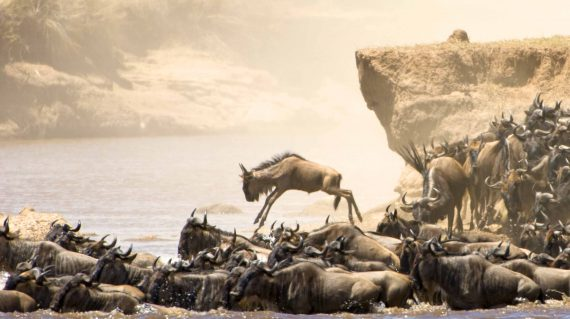 Wildebeest Crossing Basecamp