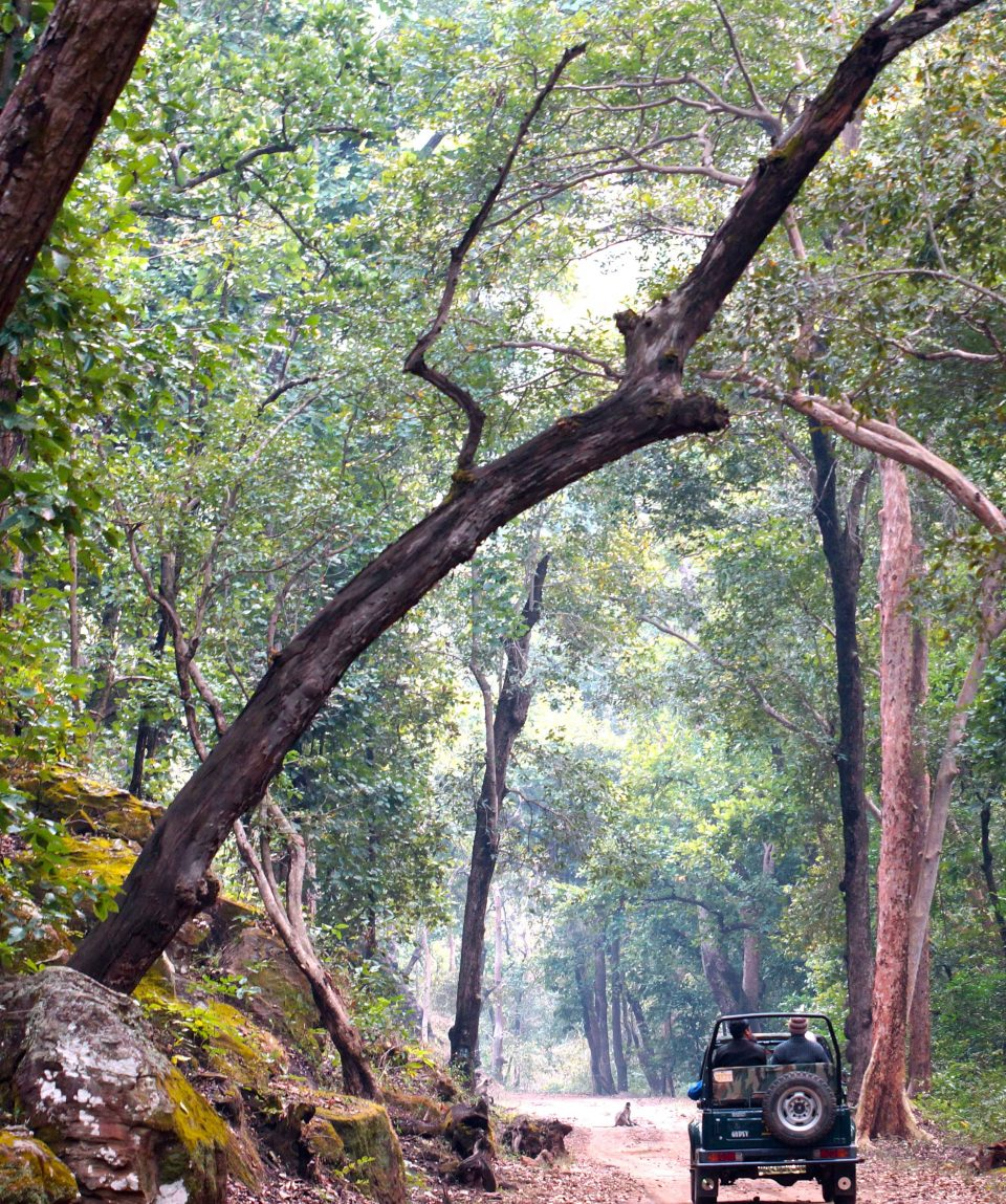 Op game drive in Kanha