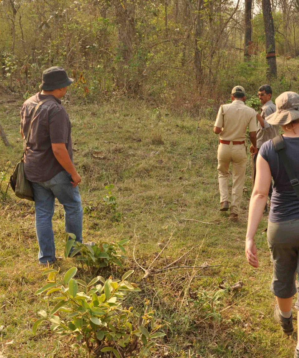 wandelsafari in Tadoba Andhari Tiger Reserve