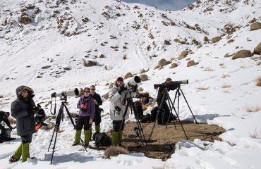 Sneeuwluipaard fotograferen