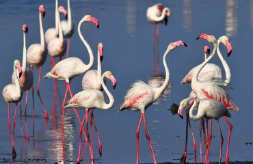 flamingo's Gujarat