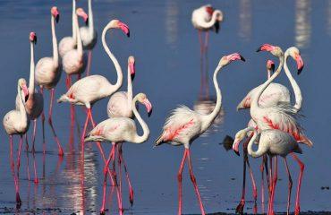 flamingo's Gujarat