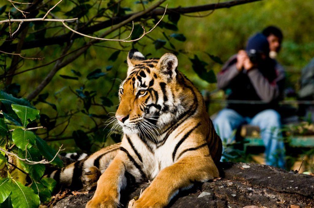 Tijgers fotograferen, tijger fotografie reis, India, tijgersafari