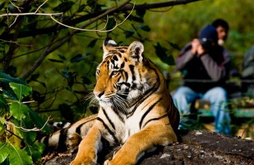 Tijgers fotograferen