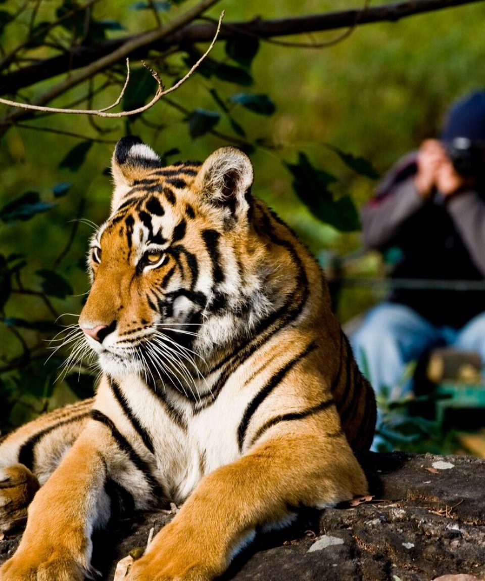 tijger Kanha NP