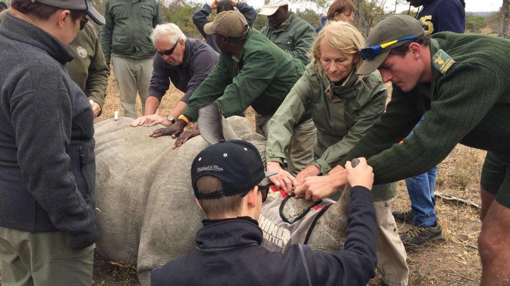 neushoorn, zuid-afrika, natuurbescherming