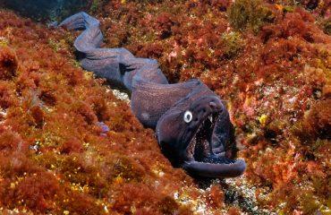 Onderwaterwereld Santa Maria