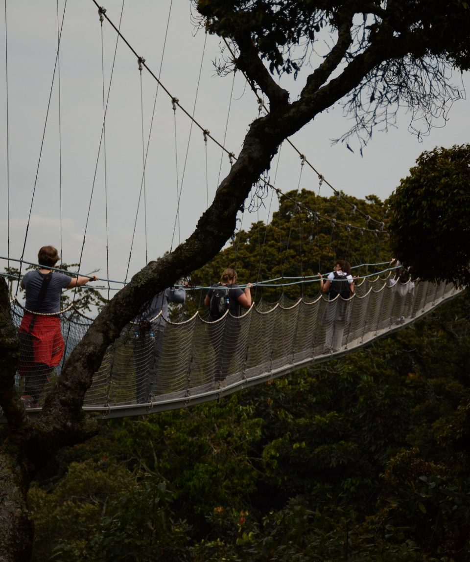Nyungwe Forest All for Nature Travel