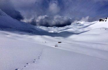 Sporen van de wolf in de sneeuw