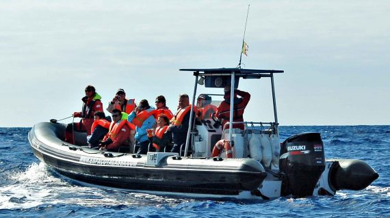 Whale watching Pico ©All for Nature Travel