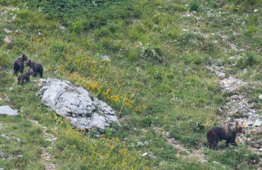 Beren Abruzzo moeder met jongen © Umberto